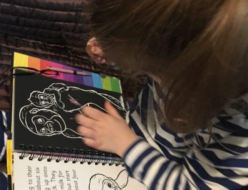 Scrach & draw animals book